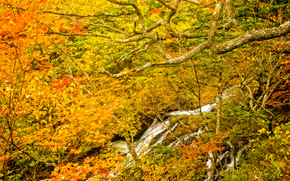 autumn, forest, trees, waterfall, nature