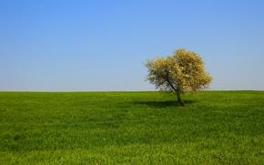 domaine, arbre solitaire, herbe, paysage