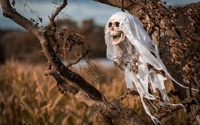 Halloween, halloween, cranio, albero