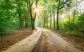 forest, park, road, trees, landscape