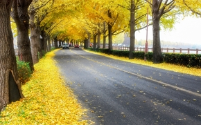 Autumn leaves, Korea, road, trees, landscape, autumn