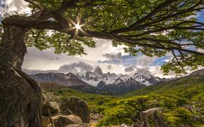 tree, Fitzroy, Argentina, Mountains, landscape