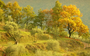 Colline, alberi, autunno, paesaggio