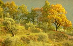Hills, árboles, otoño, paisaje