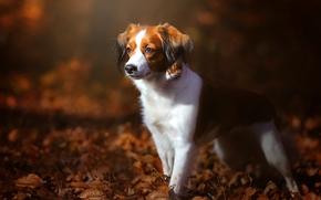 cane, fogliame, autunno
