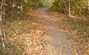 autumn, footpath, fallen leaves