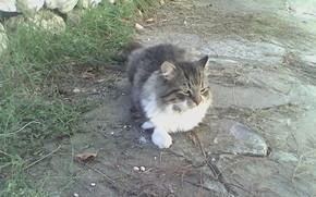 cat, Muschi, Kleine Ruhe