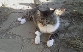 cat, Muschi, Wärme