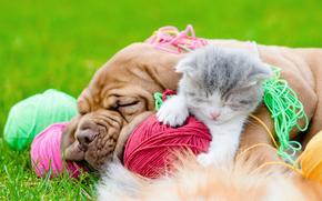 狗, 小狗, 小猫, 友, 友谊, 梦想, 娱乐, 线, 缠结