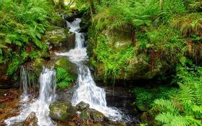 las, wodospad, kamienie, charakter
