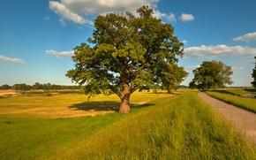campo, carretera, árboles, paisaje