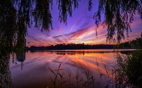 puesta del sol, río, ramas de los árboles, paisaje