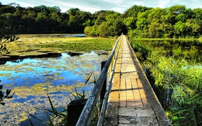 Pembrokeshire Coast National Park in the western part of Wales, Snowdonia, river, bridge, forest, trees, landscape
