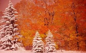 Munising, Michigan, Munizing, Michigan, autunno, alberi, abete rosso, nevicata