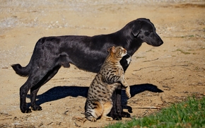cane, COTE, gatto, amicizia, Amici