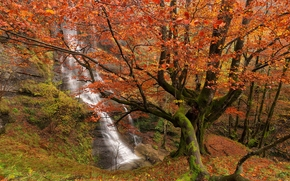 Uguna瀑布, Gorbea自然公园, 比斯开, 巴斯克, 西班牙, Gorbea自然公园, 比斯开, 巴斯克地区, 西班牙, 瀑布, 森林, 树, 秋