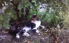 kot, kiciuś, lato
