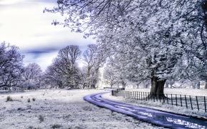 Килларни национальный парк, Графство Керри, Ирландия, поле, дорога, деревья, иней, пейзаж