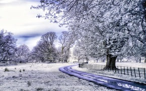 Killarney National Park, County Kerry, Ireland, field, road, trees, frost, landscape