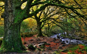 基拉尼国家公园, 秋, 森林, 潆, 树, 景观