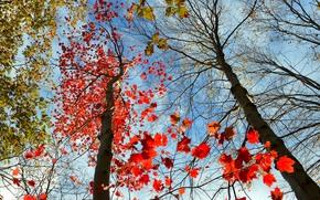 осень, небо, деревья, кроны, природа