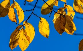 automne, BRANCH, feuillage, nature