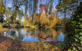 осень, парк, пруд, деревья, пейзаж