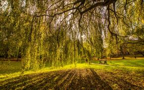 Великобритания, Престон, осень, поляна, деревья, ветви, пейзаж