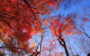 automne, arbres, couronne, nature