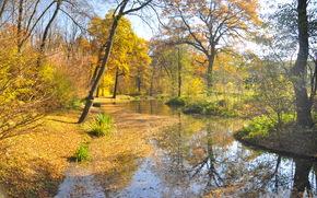 automne, canal, forêt, arbres, paysage