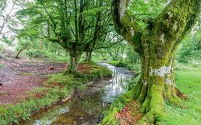 речка, деревья, природа