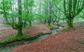 лес, деревья, речка, пейзаж