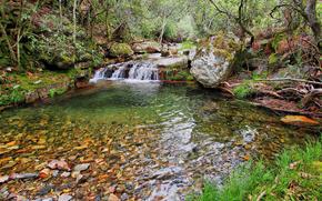 forêt, petite rivière, arbres, cascade, nature