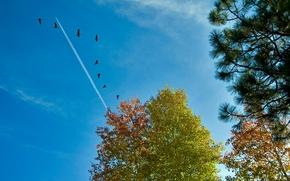 céu, árvores, avião, aves, paisagem