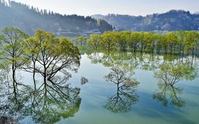 Jezioro Shirakawa, Iide, Yamagata, Japonia, Jezioro Shirakawa, Iide, Yamagata, Japonia, jezioro, drzew, odbicie