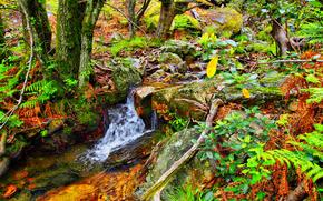 automne, forêt, arbres, cascade, nature