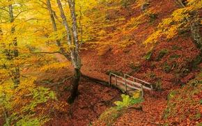 autumn, forest, trees, ravine, kosagor, bridge, footpath, landscape
