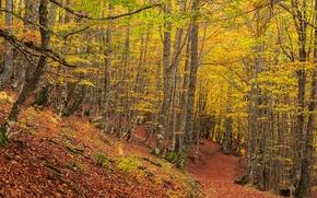 autunno, foresta, alberi, stradale, natura