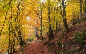 autumn, forest, trees, road, landscape