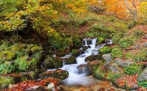осень, лес, деревья, водопад, речка, камни, природа