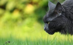 кот, кошка, мышка, гляделки