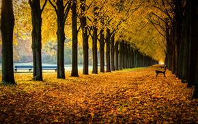 Georgengarten, Herrenhausen Gardens, Hanover, Lower Saxony, Germany, Георгенгартен, сады Херренхаузен, Ганновер, Нижняя Саксония, Германия, осень, парк, аллея, деревья, листья, скамейки