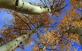 autunno, alberi, incoronare, natura