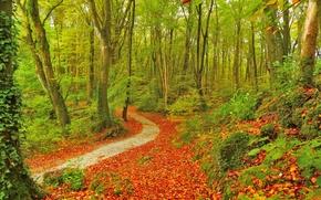 automne, forêt, arbres, sentier, nature