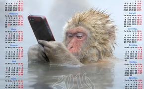 Monkey with a phone calendar, monkey, Monkey symbol 2016, Calendar 2016, calendar with a monkey