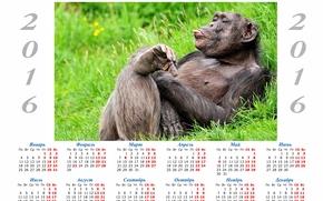 monkey, Monkey symbol 2016, Calendar 2016, calendar with a monkey