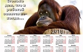 Calendar Monkey in meditation, monkey, Monkey symbol 2016, Calendar 2016, calendar with a monkey