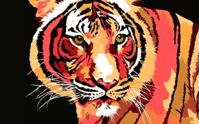 tygrys, wektor, sztuka