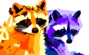 mapaches, vector, arte