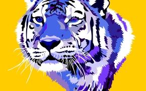 tigre, vector, arte